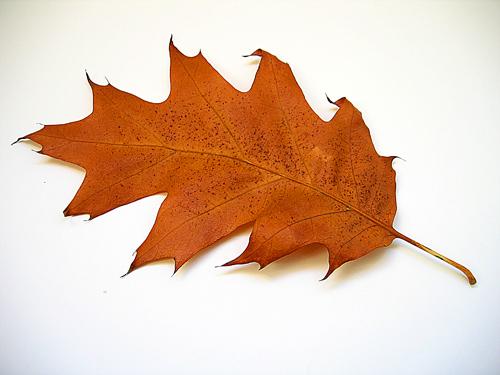 autumn2 7 Fantastic Tips to Capture Autumn Images