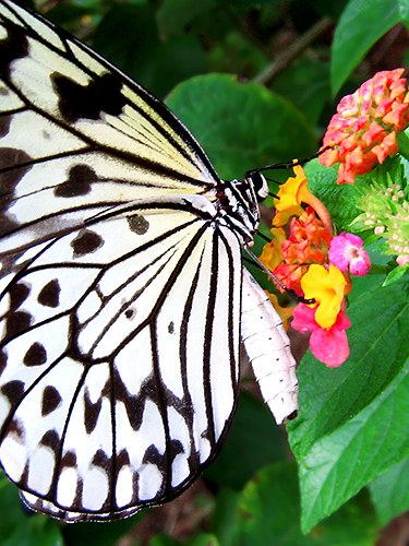 butterfly 5 Useful Tips on Shooting Nature Macro