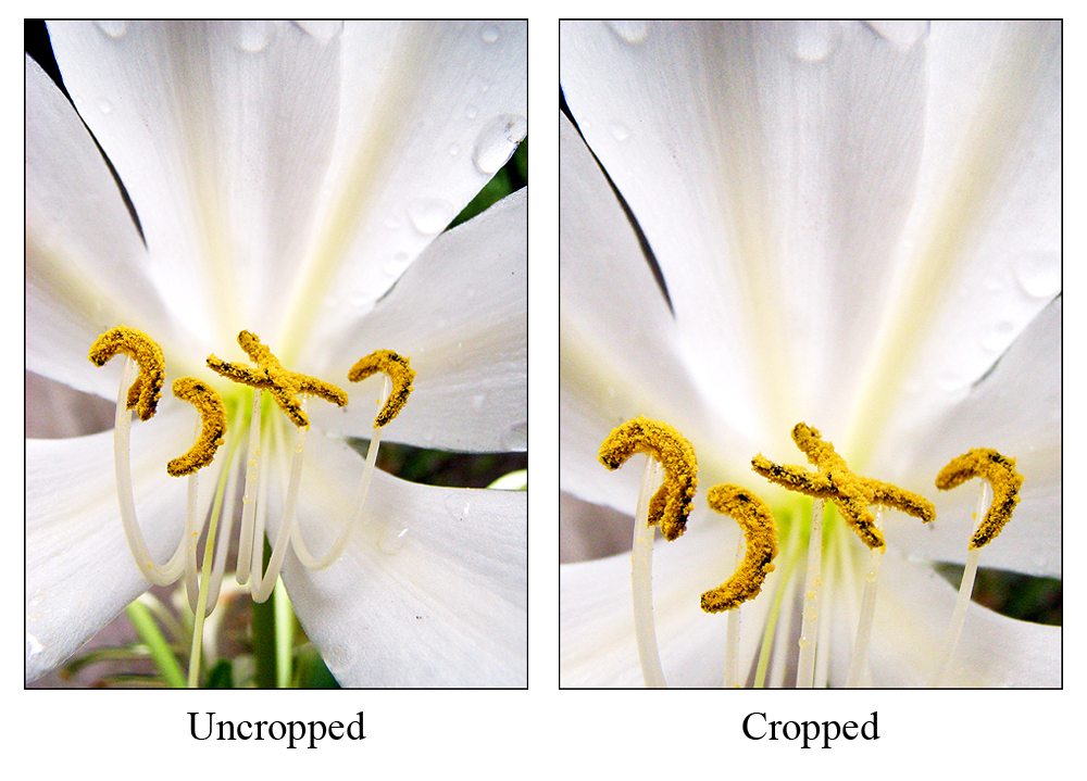 crop 4 More Quick Photoshop Tips That Can Dramatically Improve Your Shots