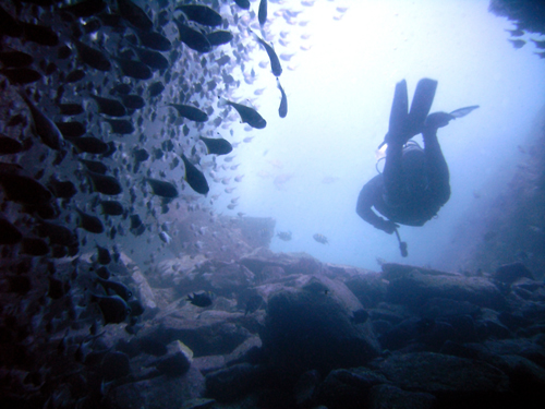 diver 2 by hamletnc Diving into Underwater Photography, Part 2: 5 More Essential Things to Remember