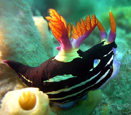 nudibranch by hamletnc Using Strobes in Underwater Photography