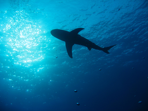 shark by diko1967 Using Ambient Light in Underwater Photography