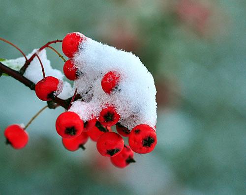 snow2 Photographing Snow Scenes