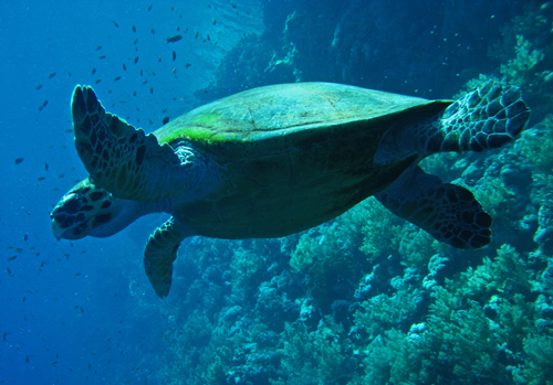 tortoise by diko19671  Diving into Underwater Photography, Part 1: 5 Essential Things to Remember